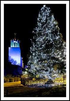 Newcastle Civic Centre Xmas tree from Bergen - 310/365 | Flickr - Photo Sharing!