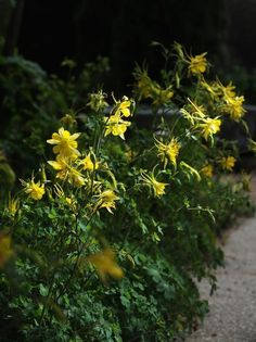 3 desert-tough plants that will be rock stars in a drought