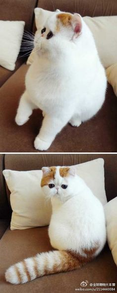 Grumpy cat has nothing on flat face kitty...lol