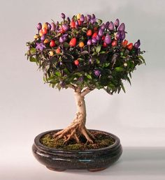 Bonsai trees can be sold at a vast price in the industry. Without the right size pot, a Bonsai tree cannot survive. Bonsai trees aren't grown for the aims of food manufacturing, medicinal uses, or for creating landscape. Ikebana, Bonsai Garden, Garden Plants, Indoor Plants, Balcony Garden, Plantas Bonsai, Fruit Trees, Trees To Plant, Bonsai Trees