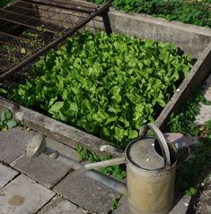 Still trying to decide which vegetables to grow this spring? Take a look at this list of 21 vegetables for some ideas. 1. Snap Beans Snap beans take 40 to 65 days to mature. Plant seeds 1 in...