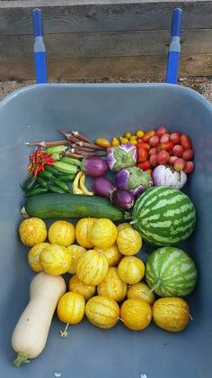The Baylor Community Garden provides educational opportunities to university and local organizations on how to maintain gardens and encourage healthy lifestyles. It even serves as a food source for feeding the hungry though BU Campus Kitchens!