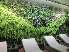 The tenderly cared for living wall of tropical plants within the indoor Spa at Castell Son Claret Tropical Plants, Spa, Indoor, Luxury, Wall, Majorca, Interior