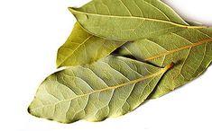 Dafinul este originar din Levant şi în prezent este cultivat mai ales în regiunile mediteraneene. Florile sale, de culoare gǎlbuie, poziţionate pe axul frunzei, sub formǎ de bucheţele.Medicii greci foloseau mult frunzele şi fructele de dafin. Plant Leaves, Website, Greece, Green, Plant