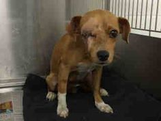 Needs urgent rescue. High kill shelter. Downey, CA.   Animal ID: A4789143  I don't have a name yet and I'm an approximately 2 year old female chihuahua sh. I am not yet spayed. I have been at the Downey Animal Care Center since January 5, 2015. I will be available on January 9, 2015. You can visit me at my temporary home at D716. — with Tula Cakir, Heidi Hylkema, Paul Hupp, Edie Messick, Sandra Janoski, Joelle Stonebraker, Mike Levitt, Victoria McCullough, Terry Phillips and Carrie Diamond.