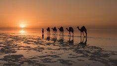 CAMELS  Viktoria Rogotneva photographed a caravan of camels on a salty lake in North Africa. -- http://vrogotneva.com/en/