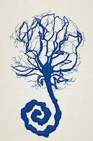 placenta art print
