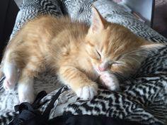 Sleep-ins Beauty