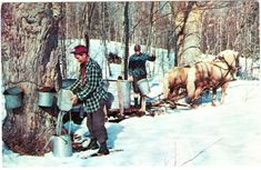 How to Make Maple Syrup like a Vermonter