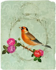 Polli: Birdy Vintage - absolutely love it Bird Illustration, Illustrations, Vintage Postcards, Vintage Images, Bird Pictures, Little Birds, Botanical Prints, Bird Art, Beautiful Birds