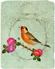 Love the bird illustrations