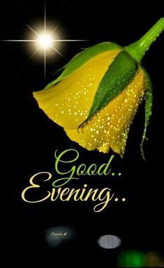 Good Night Miss You, Cute Good Night, Good Night Gif, Good Night Image, Good Night Quotes, Good Evening Messages, Good Evening Wishes, Good Evening Greetings, Good Night Wishes