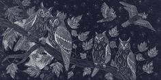 Nocturnal animals picture book - Catherine Rowe Illustration