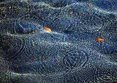 📌 Coral Reef Brain coral - download photo at Avopix.com for free    ✅ https://avopix.com/photo/12771-coral-reef-brain-coral    #coral #reef #brain coral #texture #water #avopix #free #photos #public #domain