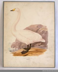 Hallands kulturhistoriska museum Swan, Museum, Painting, Art, Craft Art, Swans, Painting Art, Kunst, Paint