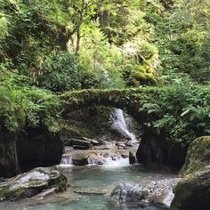 #nature #bucolic #calm #megeve