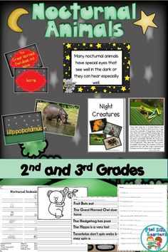 Nocturnal Animals Reading Passage and Comprehension Worksheets Teaching Activities, Fun Learning, Teaching Resources, Classroom Resources, Teaching Ideas, 3rd Grade Classroom, Classroom Posters, Early Childhood Activities, First Grade Science