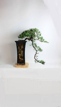Mature Juniper procumbens nana bonsai tree from the estate of Hirobumi Aso