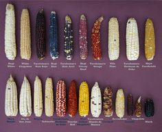 Corn of the Eye