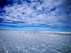 Utsjoki, Finland. Lapland. #travelscandinavia