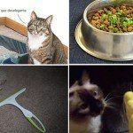 limpeza casa animais domesticos