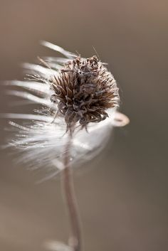 The light was extraordinary and perfect.  Reaching the weed with rays of brilliant white, the ordinary was transformed.