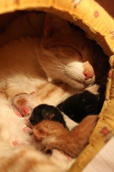little newborn kittens with mamma