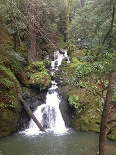 Cataract Falls - Fairfax, CA - definitely going on this hike