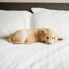 Update your bedding basics with soft texture in solid colors for a relaxing bed that's anything but boring. Cute Dogs And Puppies, I Love Dogs, Puppy Love, Adorable Puppies, Cute Baby Animals, Animals And Pets, Doge, Mans Best Friend, Best Dogs