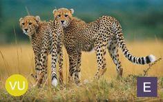 endangeredspeciesactcelebrates0220131.jpeg (1000×630)