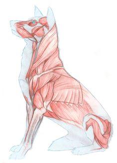 Dog Muscles by Brokenfangs.deviantart.com on @deviantART