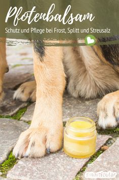 Pflegenden und schützenden Pfotenbalsam für Hunde selber machen In order to protect and care for the paws of your four-legged friend even in winter, you can easily make a balm from natural ingredients Pet Dogs, Dog Cat, Pitbull, Diy Dog Toys, Lactation Recipes, Shelter Dogs, Dog Accessories, Four Legged, Dog Food Recipes