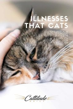 Cats are masters at disguising illness. It's their way of hiding weakness from predators, but it doesn't help us take care of them. Here are four illnesses that cats often hide, even from their owners. #cattitudedaily #cathealth #catillness Cat Health Care, Health Tips, Cat Cpr, Healthy Cat Food, First Time Cat Owner, Cat Medicine, Kitten Food, Cat Ages, Cat Care Tips