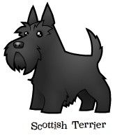 scottish-terrier.