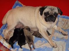 Frida e bebês