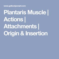 Plantaris Muscle | Actions | Attachments | Origin & Insertion