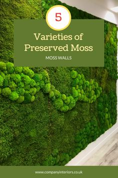 The Pre-made Flat Moss Panels are ready to use in your decor design either for your moss wall or a moss frame. They are pre-glued onto a 5mm mdf backing so can be bonded onto a surface or mechanically fixed with small screws through the front onto a hard backing or surface. They require NO Maintenance, watering or day-light, as they are made from preserved moss which is stabilized and will  last at least 10 years. These allow your designs to bring outside nature into your interior designs. Money Tree Bonsai, Money Trees, Board Rooms, Diy Crafts Materials, Moss Letters, Moss Decor, Ivy Wall, Moss Wreath, Moss Art