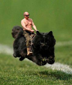Surrealism art riding a cat :)