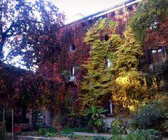 Autunno a Milano. #autumn #in #milan #ig_milan #milanodavedere #volgolombardia #this #goldleaves #leaf #green #red #redleaves #trees #ivy #decay #brera #romantic #giardinobotanico #botanicalgardens #botanic #flaneur #architecture #buildingporn #vscocam #photooftheday #photowall #follow by malrivo