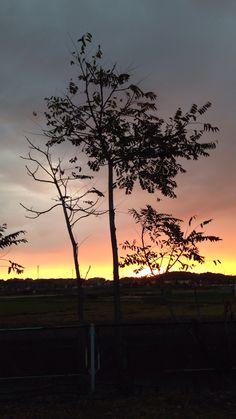 朝焼けと樹木