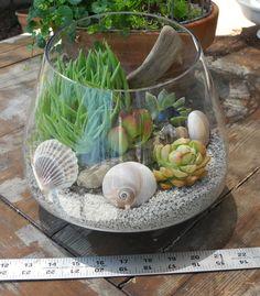 Coastal Beachy Succulent Garden Terrarium by Tinasittybittygarden