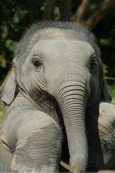 ผลการค้นหารูปภาพสำหรับ elephant parade land