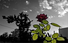 The rose by Ilias Gousios on 500px