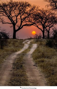 59 ideas nature landscape photography trees paths for 2019 Beautiful Sunset, Beautiful Places, Landscape Photography, Nature Photography, Photography Outfits, Photography Lighting, Photography Website, Beach Photography, Africa Travel