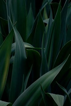 Close-up of dark green leaves. Green Leaves, Plant Leaves, Tumblr Photography, Photography Flowers, Green Life, Green Plants, Shades Of Green, Belle Photo, Planting Flowers