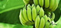 Os 14 Benefícios da Banana Verde Para Saúde | Dicas de Saúde