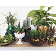 alice lane home collection, fiddle leaf fig, gold pot, cactus, succulents