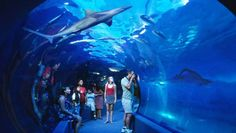 Hawaii Vacation Guide: Must Sees: Maui Ocean Center