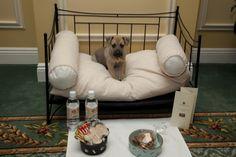 Pet Friendly - The Hermitage Hotel Nashville, Tennesse