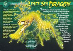 Name: Leafy Sea Dragon Category: Strange Wonders Card Number: 61 Front: Leafy Sea Dragon Strange Wonders card 61 front Back: Leafy Sea Dragon Strange Wonders card 61 back Trading Card: Wild Creatures, All Gods Creatures, Unique Animals, Animals Beautiful, Leafy Sea Dragon, Fish Rocks, Wildlife Biologist, Monster Book Of Monsters, Underwater Creatures